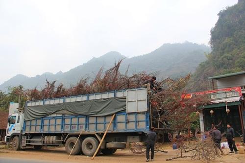 Cho thuê xe tải chở hàng tết 2016