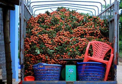 Xe tải chở vải Hưng Yên đi các tỉnh