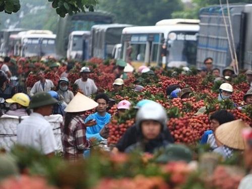 Cho thuê xe tải chở vải từ Bắc Giang - Hà Nội