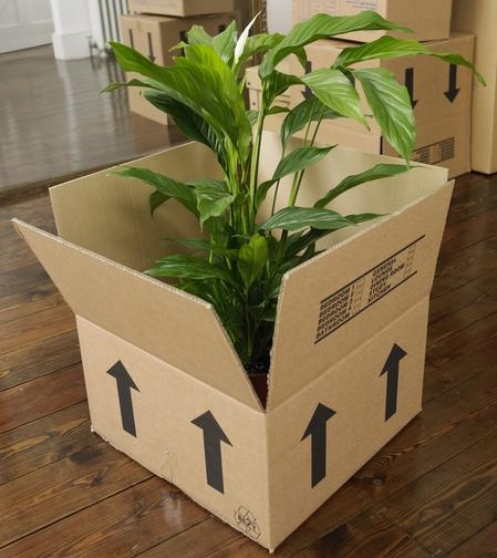 Kinh nghiệm chuyển cây cảnh khi chuyển nhà